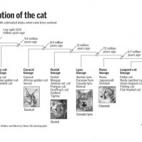Cat_Evolution_Tree.jpg