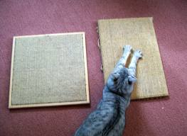 cat scratching pad