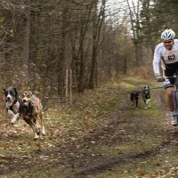 dog sports bikejoring_race