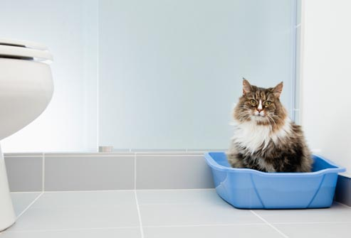 cat using litter tray