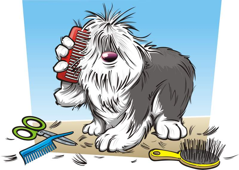 How To Bond With Your Dog With Grooming And Massage