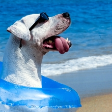 summer top tips for pets