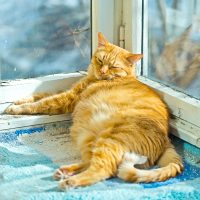 Fat orange cat sleeping on a sunny day time on a balcony, fat happy cat, happy cat, domestic cat